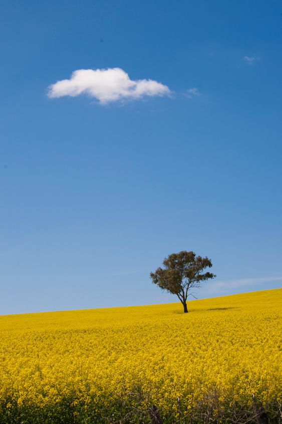 Jim Moorehead: Canola and Cloud